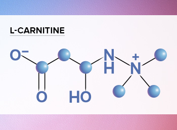 L-carnitine diagram