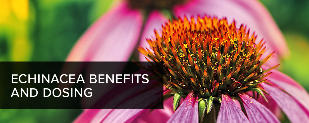 Echinacea Benefits and Dosing