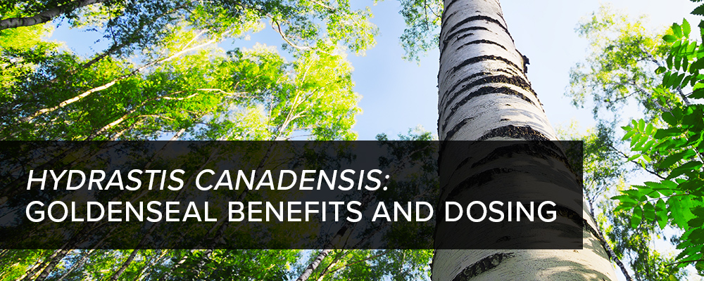 Hydrastis Canadensis (Goldenseal) Benefits and Dosing