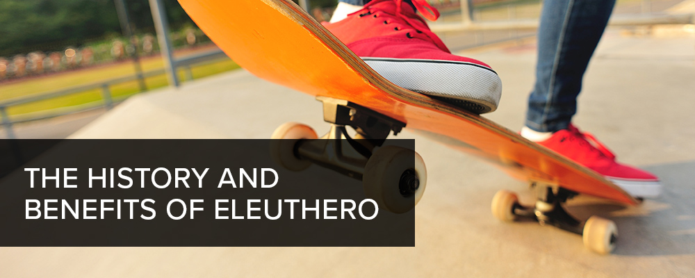 The History and Benefits of Eleuthero