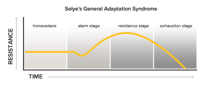 general adaptation syndrome (gas) stages | integrative therapeutics, Skeleton