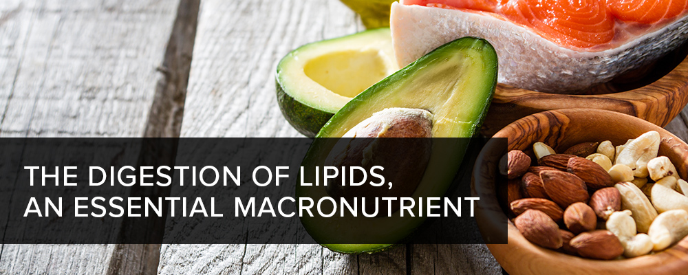The Digestion of Lipids, an Essential Macronutrient