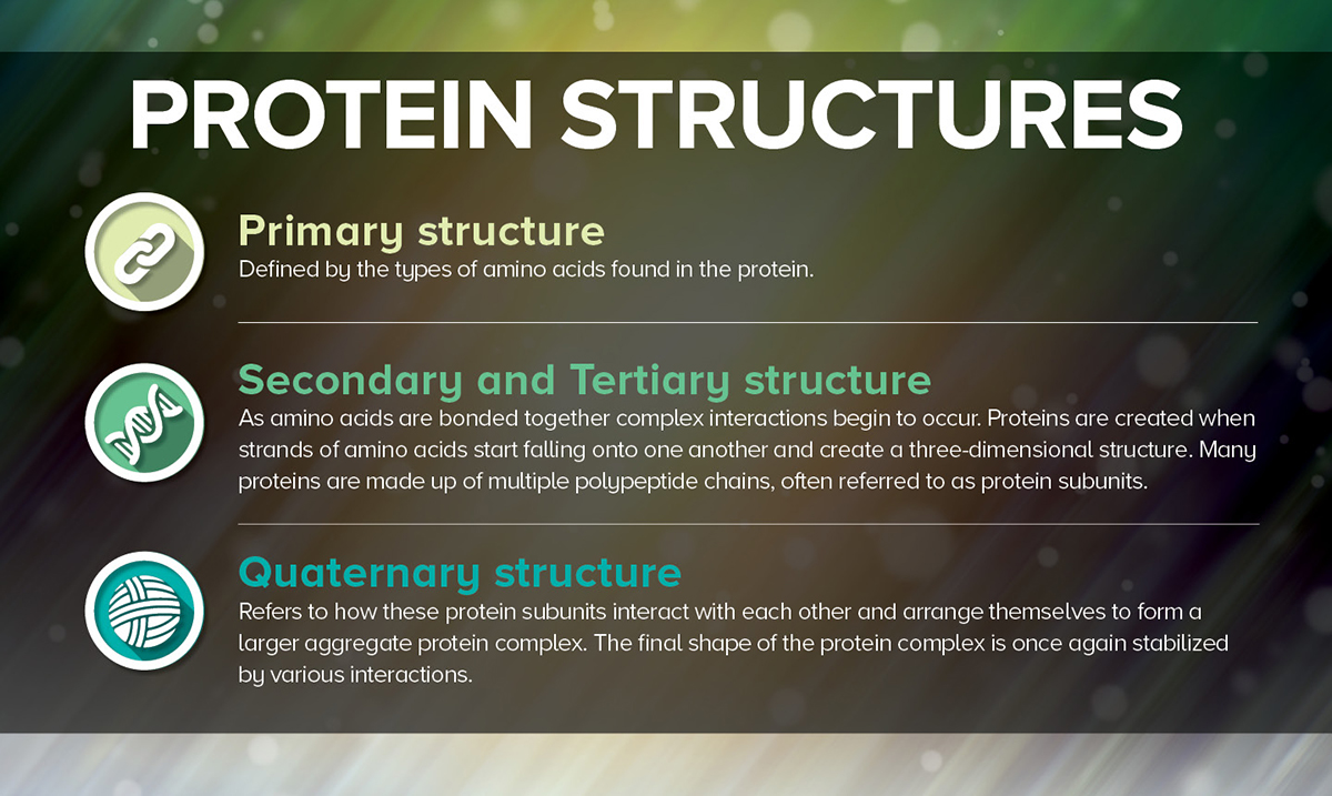 Protein Structures Graphic