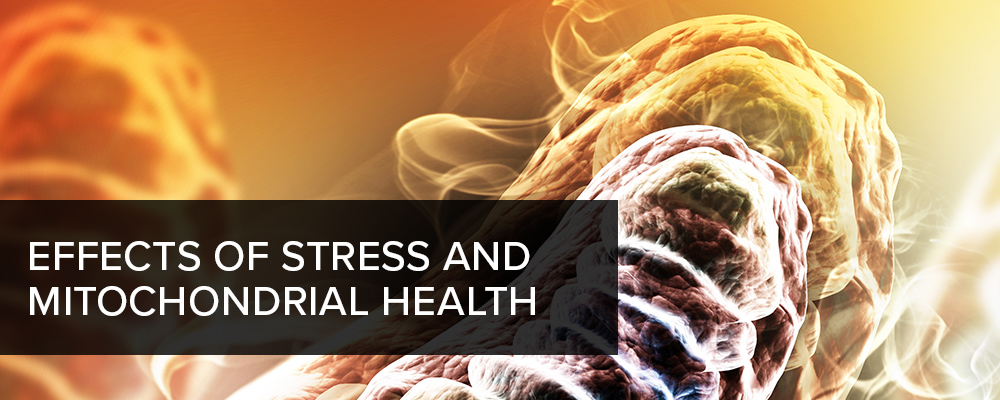 Effects of Stress and Mitochondrial Health