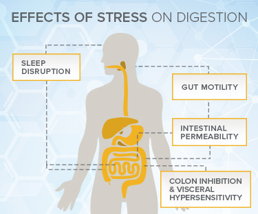 Effects of Stress on Digestion Illustration