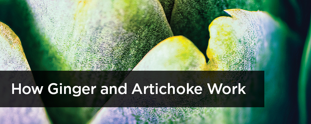 How ginger and artichoke work