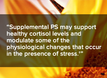 Supplemental PS may support healthy cortisol levels and modulate some of the physiological changes that occur in the presence of stress.