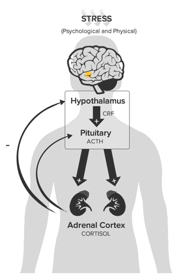 living with damage to the hypothalamus essay Homeostasis is an important characteristic of living receptors in the skin and the hypothalamus sense the temperature brain damage, and even death.